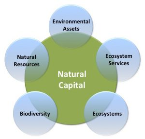 Earth Natural Capital